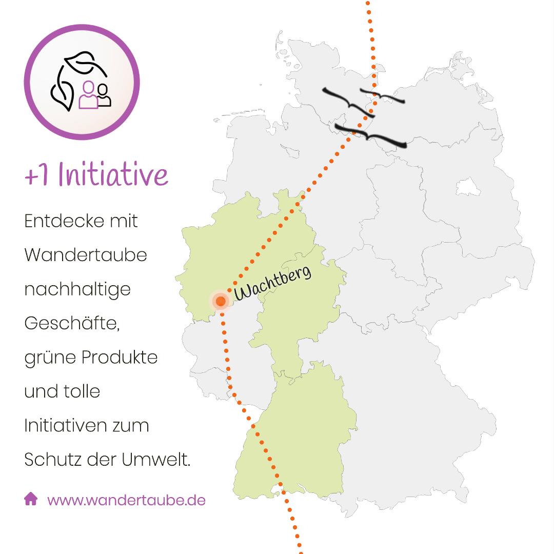 Wandertaube in Wachtberg